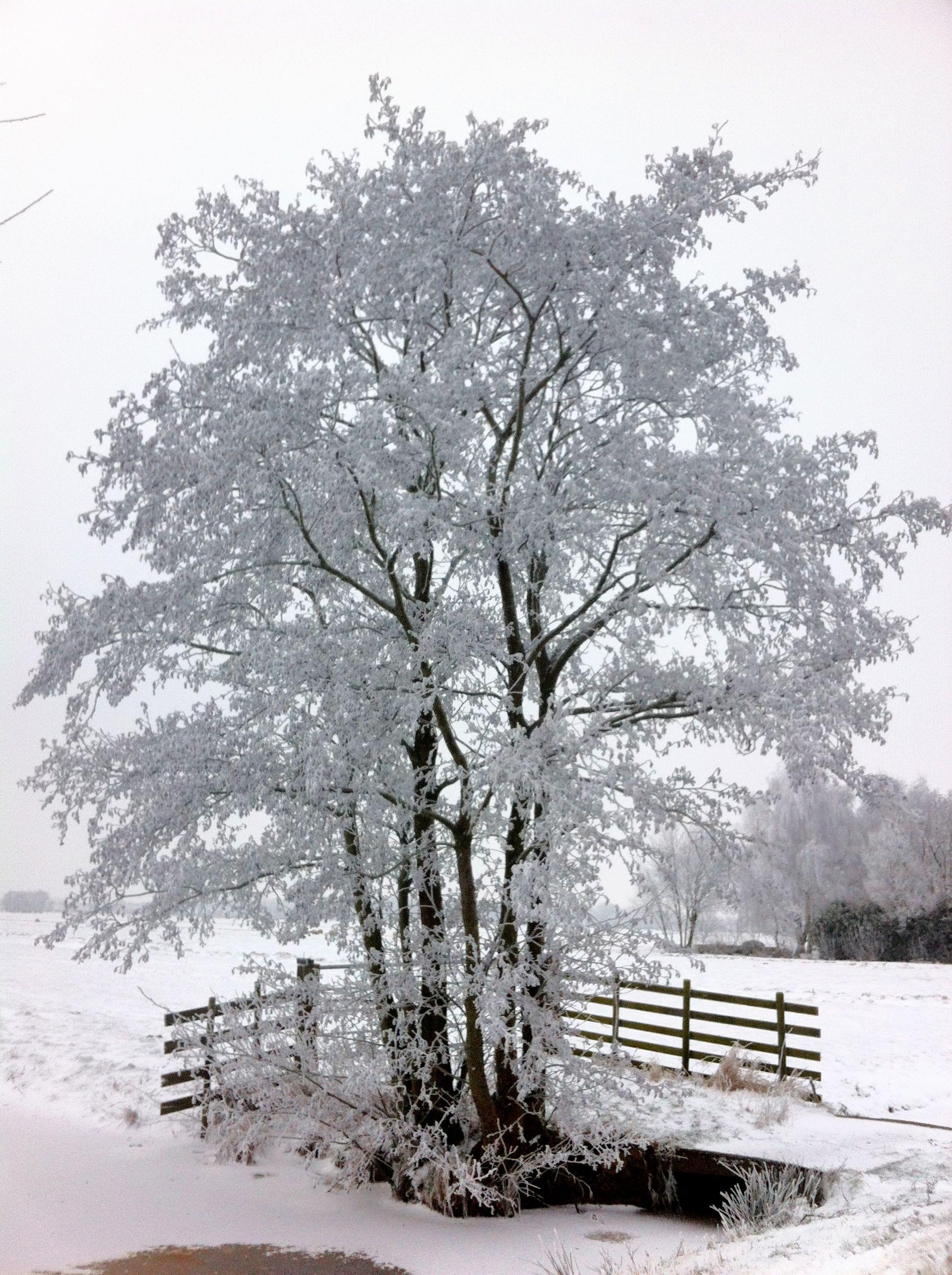 Iedere boom is een kunstwerk vandaag!