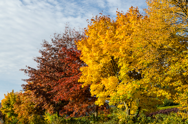 Pfalz - Herfst 2013