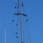 Birds!!!